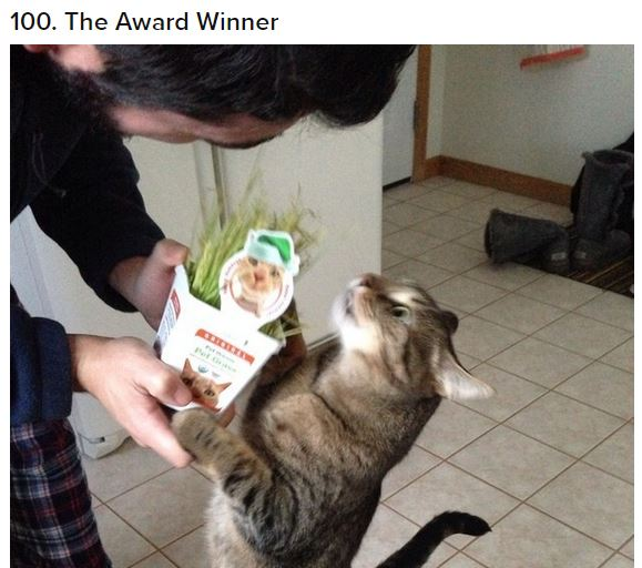cat award winner