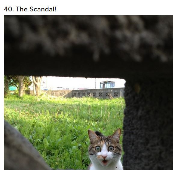 cat scandal