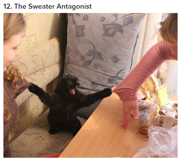 cat sweater antagonist